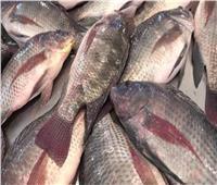 ضارة أم لا؟.. السبب وراء ظهور مادة مخاطية غريبة على «سمك البلطي»