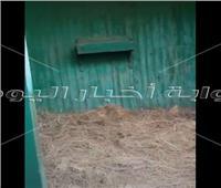 مبيت خاص للزرافات الجديدة بحديقة الحيوان.. فيديو