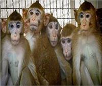 «القرود» تثير غضبا ضد «ناسا»
