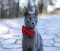 بعد إنقاذه من مكب نفايات.. تعيين قط روسي «نائب وزير»
