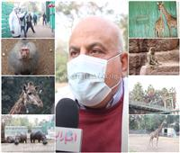 فيديو| رئيس مركزية حديقة الحيوان: فحص دوري عن كورونا