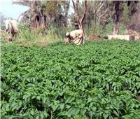 «القصير»: الزراعات التجميعية تقضي على تفتيت الحيازة