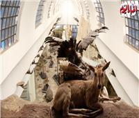 سر تحنيط الحيوانات بـ«متحف حديقة الجيزة»| فيديو