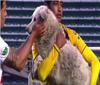 كلب يقتحم مباراة كرة قدم ويتسبب في إيقافها.. فيديو