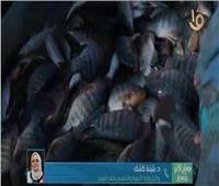 بثينة كشك تكشف عن فصول الاستزراع السمكي بالتعليم الفني.. فيديو