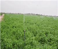 حصاد 2020 | مشروعات متوقفة ومتعثرة عادت للعمل بالفيوم