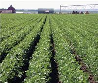 طريقة سهلة للحفاظ على المحاصيل الزراعية من الإصابة بأعفان الجذور