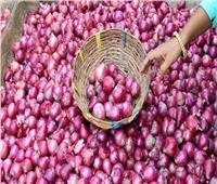 أول قرار لوزير الزراعة في 2021| فتح السوق الإندونيسي أمام البصل المصري