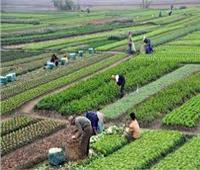 متى ظهرت برامج التأمين الزراعي؟.. الاتحاد المصري يجيب