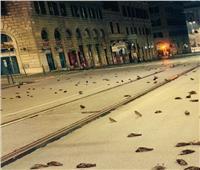 أصيبت بـ«نوبات قلبية».. مجزرة بحق طيور روما سببتها الألعاب النارية