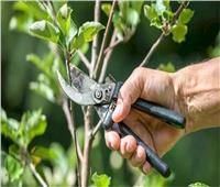 بعد تصدرهاالصادرات.. هذه طريقة تعامل المزارعين مع أشجار الموالح خلال يناير