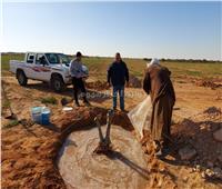 تدريبات عملية على نقل أشجار الزيتون المسنة لمزارعي مطروح.. صور