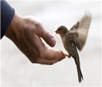 «الإفتاء»: هكذا وصف النبي من لا يتعامل بالرحمة بين الخلق