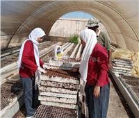 تدريب الطلاب على المحاصيل الشتوية.. مدرسة للزراعات المطرية بمطروح