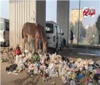 القمامة تُغرق ترعة الإسماعيلية.. والأهالي: أين المسئولين؟ فيديو