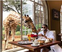 حكايات  تناول القهوة مع «الزرافات».. أغرب فندق بالعالم