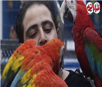 طيور فريدة.. «ببغاوات» بلسان إنسان| فيديو