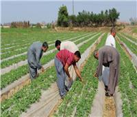 فيديو| الزراعة: انخفاض كبير في أسعار السلع رغم أزمة كورونا