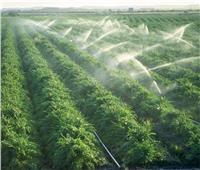 4 أهداف لمشروع «الري الحقلي» لتحقيق التنمية الزراعية