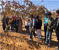 كلية الزراعة الصحراوية بمطروح.. مهمة خاصة للتنمية البيئية .. فيديو