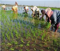 بالأرقام.. الزراعة تكشف عن أعمال القوافل البيطرية المجانية خلال 2020