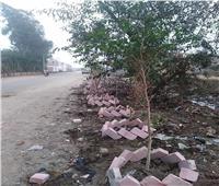 «البيئة» تعلن زراعة ألف شجرة بالمقالب العشوائية بأوسيم