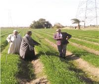 «المصطبة» توفير 1.5 مليار متر مكعب مياه سنويا بزراعة 3 ملايين فدان