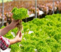 «تطوير الزراعة مستمر».. وخبراء: الحكومة تُحرص على زيادة الزمام الزراعي