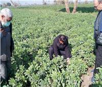 «يوم حقل» بالفيوم لشرح كيفية التغلب على مشكلة الصقيع بمحصول الفول