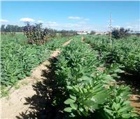الحملة القومية لمحصول الفول البلدي تقدم إرشاداتها لمزراعي النوبارية