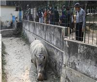 صور| أنثى وحيد القرن تعاني من الوحدة والسبب كورونا