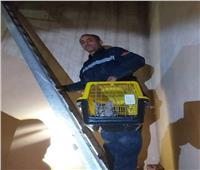 قوات الحماية المدنية ببني سويف تنقذ قطة عالقة أعلى سطح عمارة سكنية