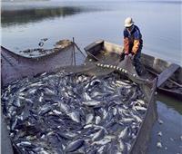 خبير استزراع سمكي: 20 كيلو في المتر إنتاجية الأراضي الصحراوية