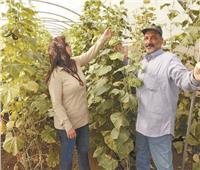 «صوب بيلا» توفر الخضراوات بأسعار مخفضة في كفر الشيخ