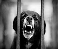 إلزام مواطن بأداء 30 ألف جنيه.. والسبب «عضة كلب»