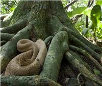 «جزيرة الأفاعي» أخطر مزار سياحي على هذا الكوكب