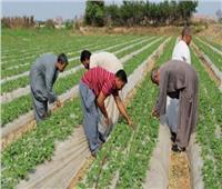«الريف المصري»: حزمة تيسيرات لصالح صغار المزارعين والشباب والمستثمرين