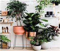 4 طرق للعناية بـ«نبات الظل»