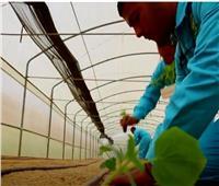 «زراعة الوادي الجديد» نستهدف جذب العمالة من مختلف المحافظات
