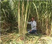 المنيا في 24 ساعة| «مزارعو القصب» يطالبون بزيادة أسعار التوريد.. الأبرز