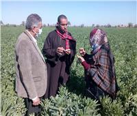 الزراعة تطمئن على حقول الفول البلدي بالفيوم.. صور