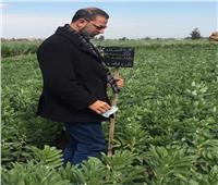 الزراعة: متابعة أي إصابات تظهر على محصول الفول.. صور