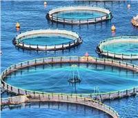 عضو «الشيوخ»: مشروع الفيروز للاستزراع السمكي يوفر مصادر غذائية آمنة