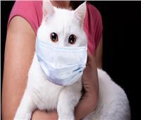 «تطور خطير».. رصد أول إصابة بكورونا لحيوان أليف