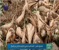 تقرير: «محصول البنجر».. كلمة السر لتحقيق الاكتفاء الذاتي من السكر