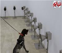 لأول مرة في مصر.. تدريب الكلاب للتعرف على مصابي كورونا |فيديو