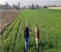 زراعة المنوفية :تنفيذ يوم حقل لمحصول القمح بمركز السادات