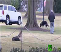 «كلاب» بايدن تصل إلى البيت الأبيض | فيديو