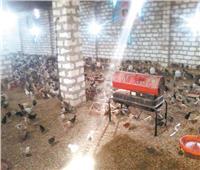 تطوير القرى قاطرة النهضة في الريف | «كومبوها» مركز إنتاج وتصدير الكتاكيت والبيض بالصعيد