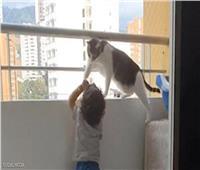قطة تنقذ رضيع من الموت.. فيديو مؤثر